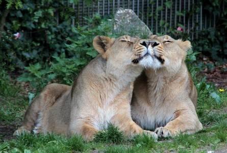 nøjne damer Aalborg Zoo rabat